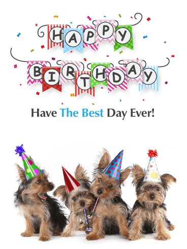 Party Puppies – Happy Birthday Card