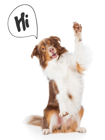 Waving Dog- Saying Hi Card