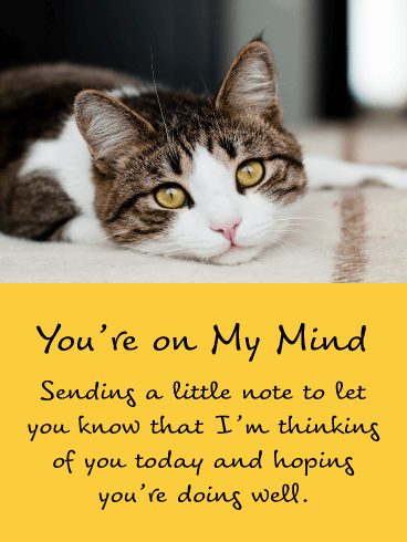 Sweet Kitten – Thinking of You Card