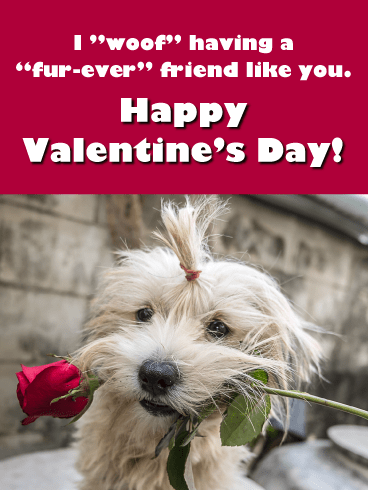 "I ""woof"" having a""fur-ever"" friend like you. Happy Valentine's Day!"