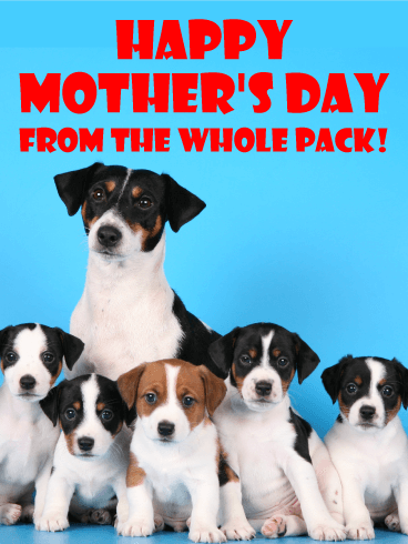 From the Whole Pack! Happy Mother's Day Card