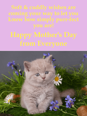 "To a ""Purr-fect"" Mom - Happy Mother's Day Card"