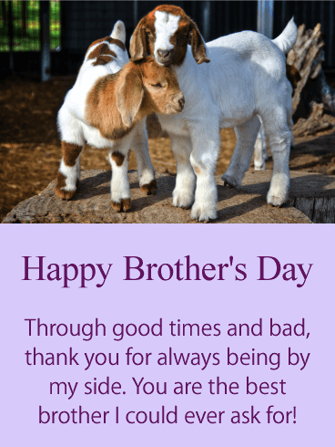 You are the Best! Happy Brother's Day Card