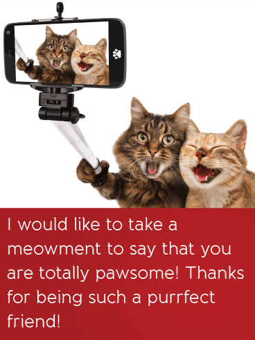 You are Pawsome! - Friendship Card
