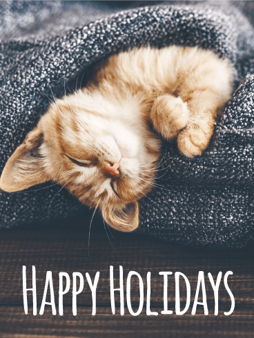 Comfy Cat Happy Holidays Card