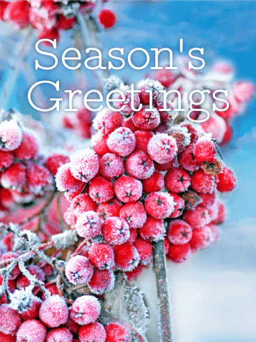 Holly Season's Greetings Card