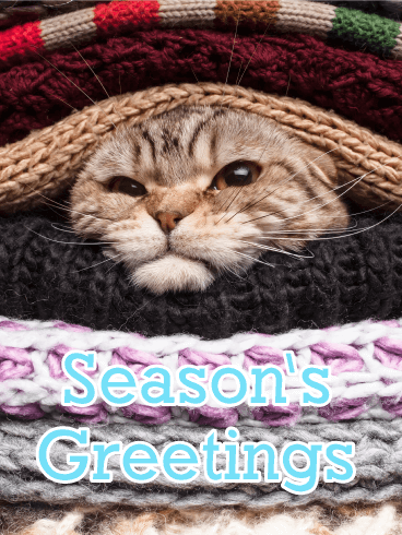 Cold Cat in Blankets - Season's Greeting Card