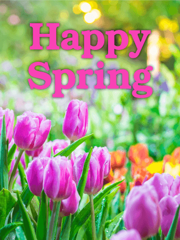 Spring cards happy spring greetings birthday greeting cards by vibrant tulip spring card m4hsunfo