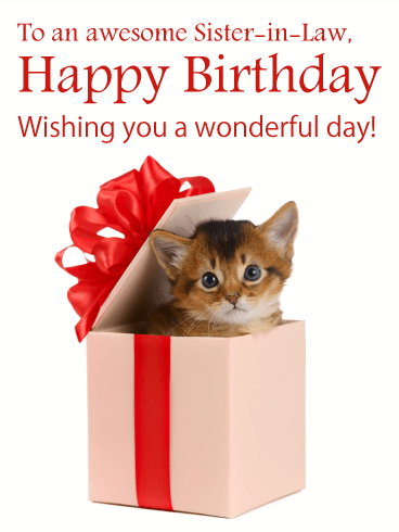 Awesome Kitten - Happy Birthday Card for Sister-in-Law