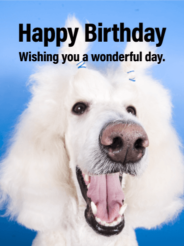 Silly Dog Smiles - Happy Birthday Card for Everyone