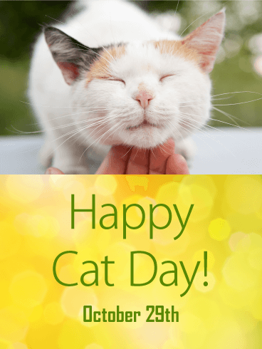 Cuddled Cute Cat - Happy Cat Day Card
