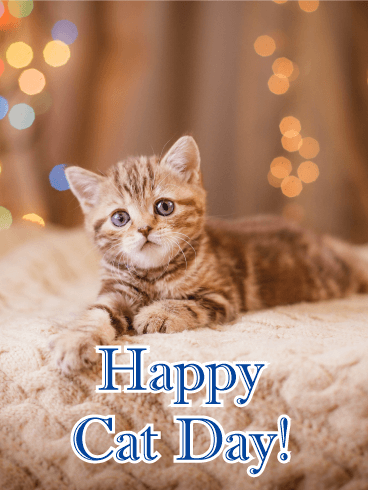 Adorable Kitten - Happy Cat Day Card