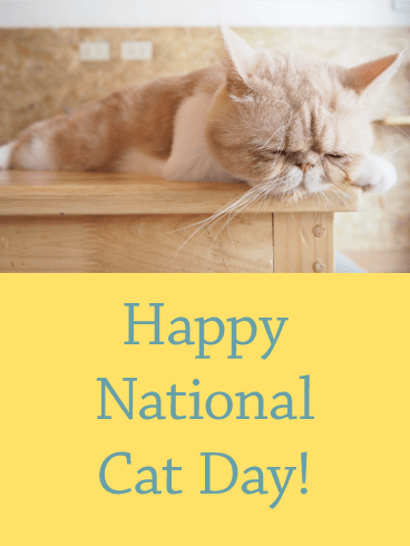 Sleeping Cat - Happy Cat Day Card