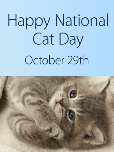 Kitty Cat National Cat Day