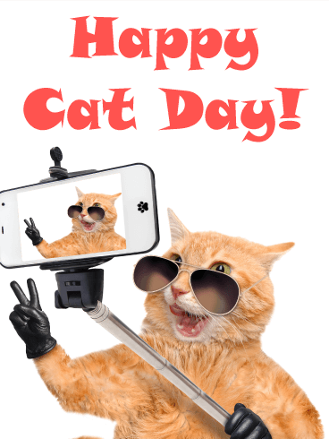 Selfie! Happy Cat Day Card