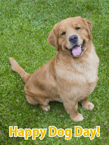 Smiling golden retriever happy dog day card birthday greeting smiling golden retriever happy dog day card m4hsunfo