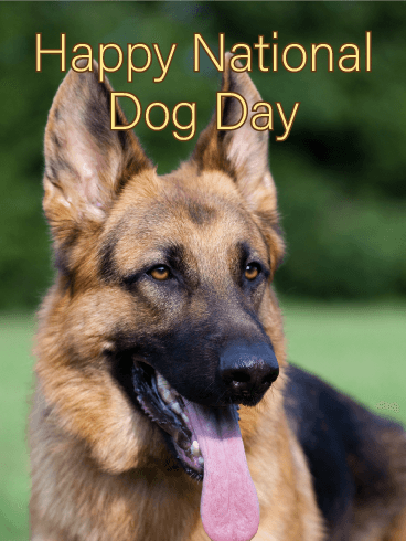 Faithful German Shepherd - Happy Dog Day Card