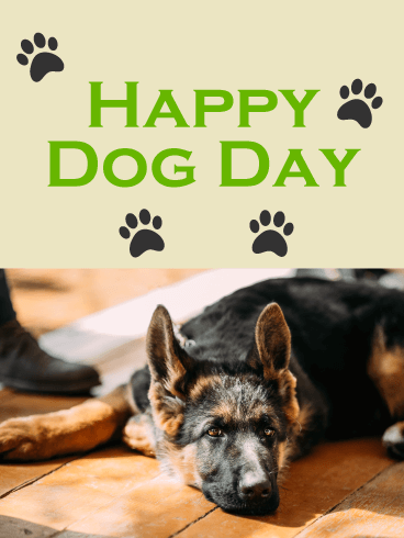 Chilling German Shepherd - Happy Dog Day Card