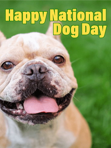 Smiling French Bulldog - Happy Dog Day Card