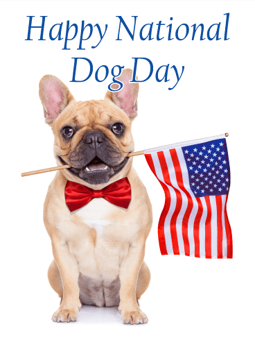Bow-Tie French Bulldog - Happy Dog Day Card