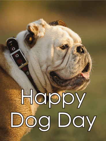 Sunset Bulldog - Happy Dog Day Card