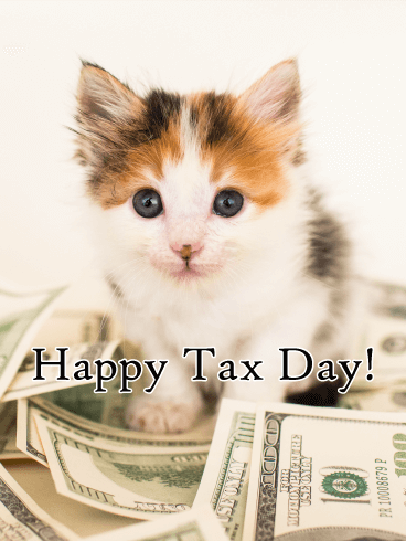 Adorable Kitten - Tax Day Card