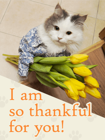 I am Thankful For You! - Thank You Card