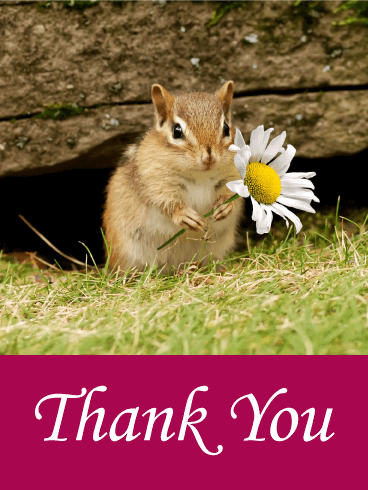 Cute Squirrel Thank You Card