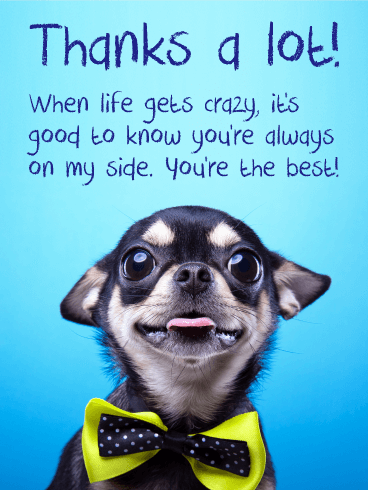 Adorable Chihuahua Thank You Card