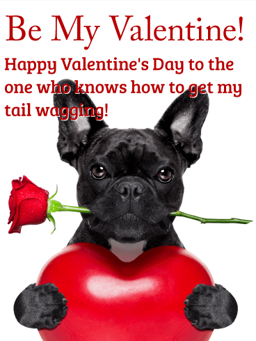 Be My Valentine! Happy Valentine's Day to the one who knows how to get my tail wagging!