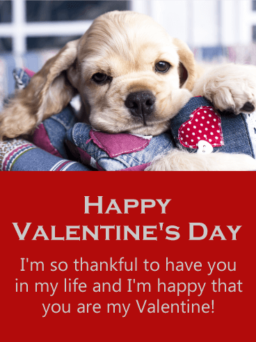 thankful to have you happy valentines day card for him - Dog Valentines Day Cards
