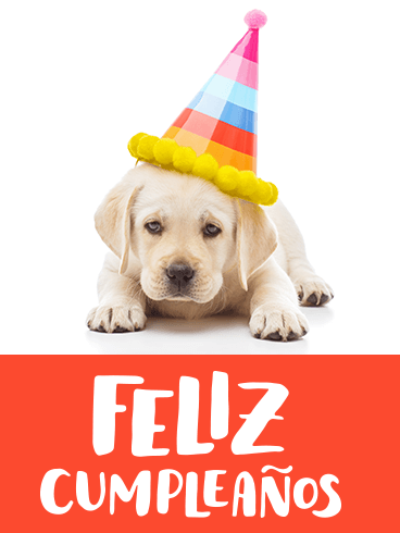 Dog Happy Birthday Card in Spanish - Feliz Cumpleaños